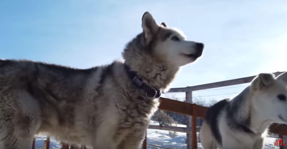 Dog Sledding – California Trail – Trail Grooming – Tread Lightly