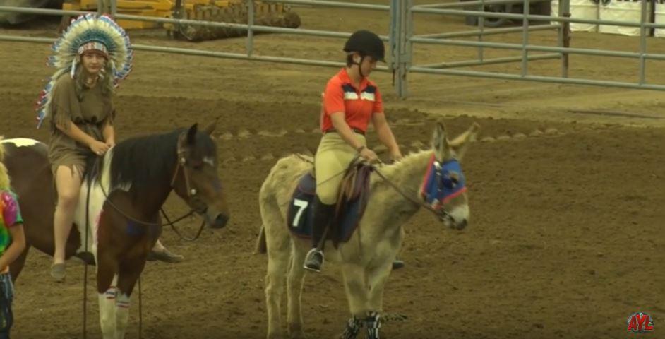 Wild Horse & Burro Festival