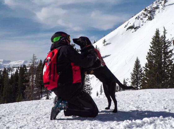 Brighton Avalanche Rescue Dogs